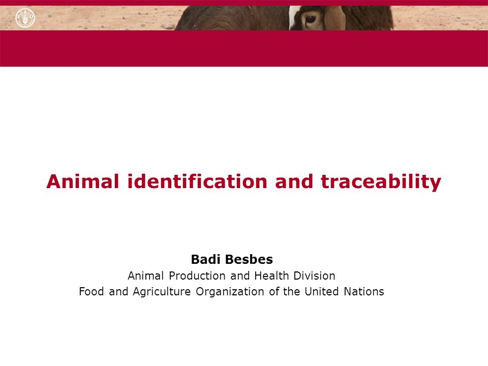 Animal identification and traceability