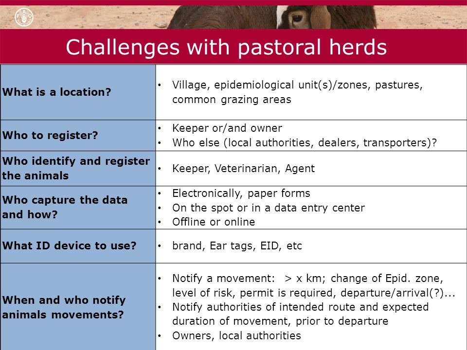 Challenges with pastoral herds