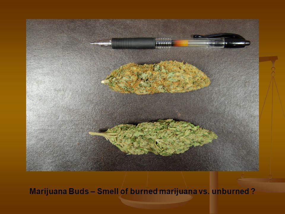 Marijuana Buds – Smell of burned marijuana vs. unburned