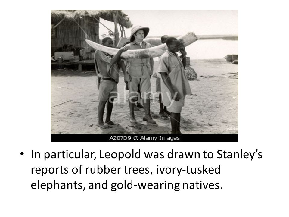 In particular, Leopold was drawn to Stanley's reports of rubber trees, ivory-tusked elephants, and gold-wearing natives.