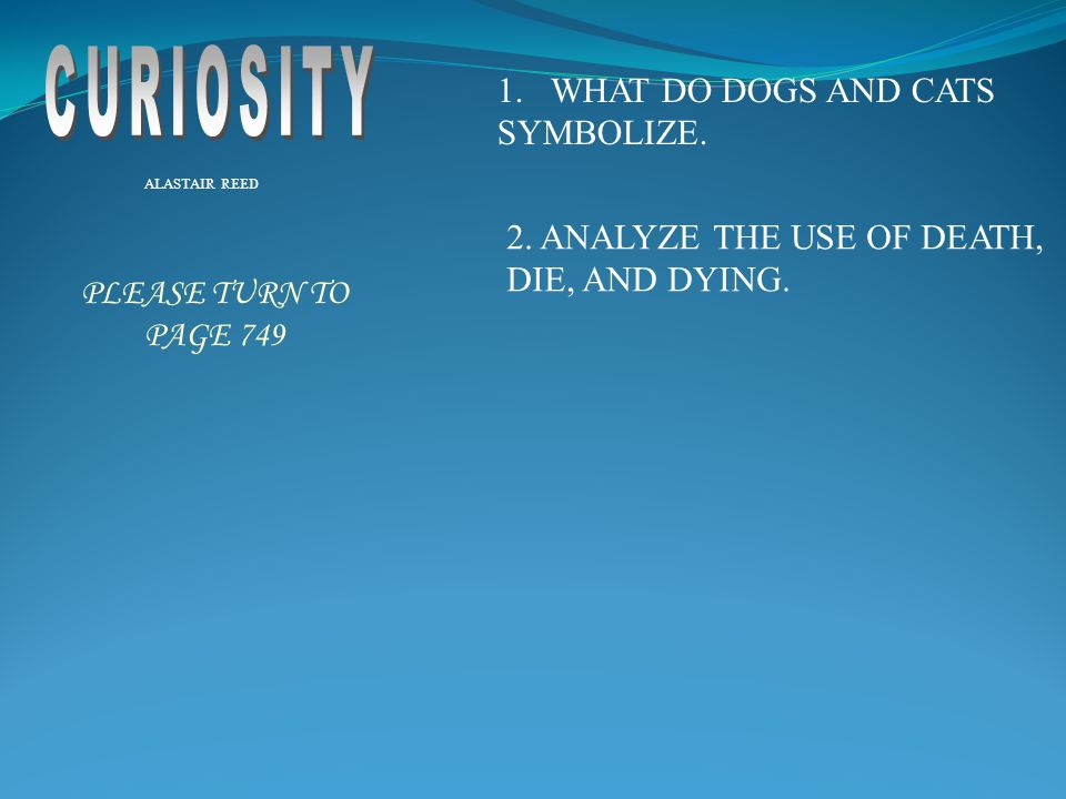CURIOSITY WHAT DO DOGS AND CATS SYMBOLIZE.