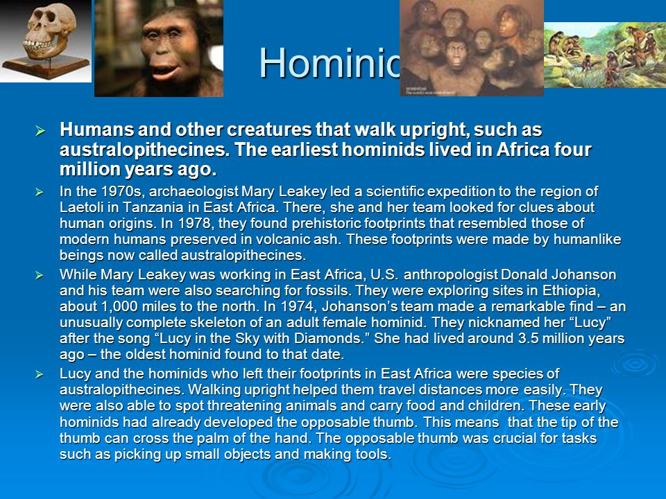 Hominid Humans and other creatures that walk upright, such as australopithecines. The earliest hominids lived in Africa four million years ago.