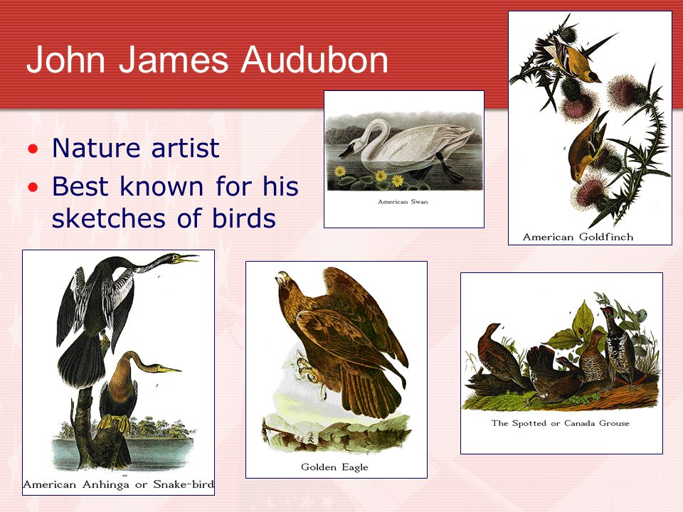 John James Audubon Nature artist Best known for his sketches of birds