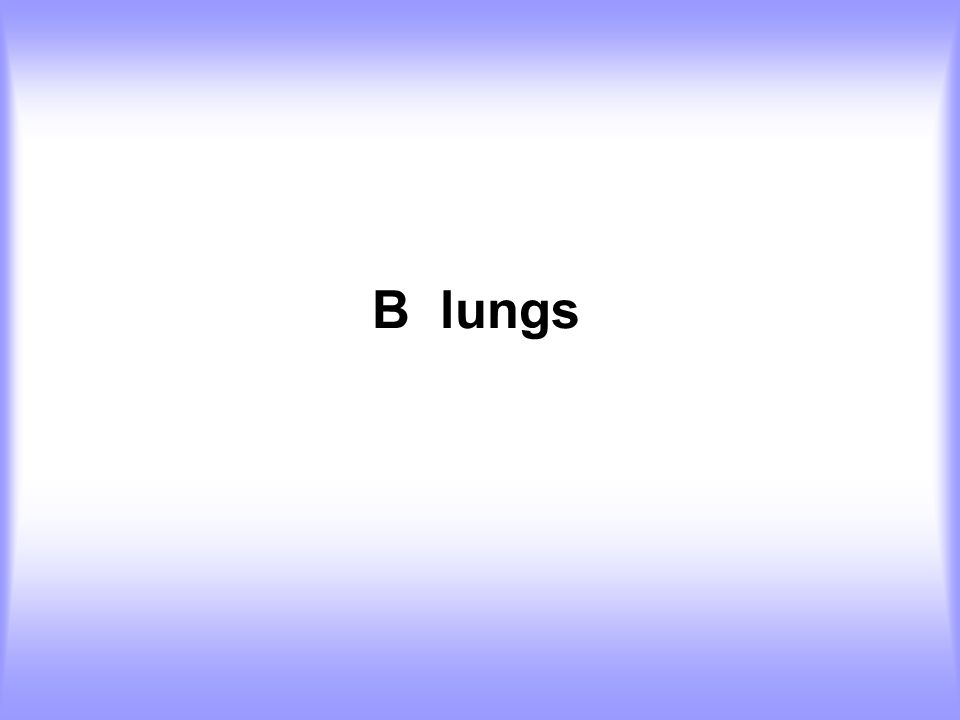 B lungs