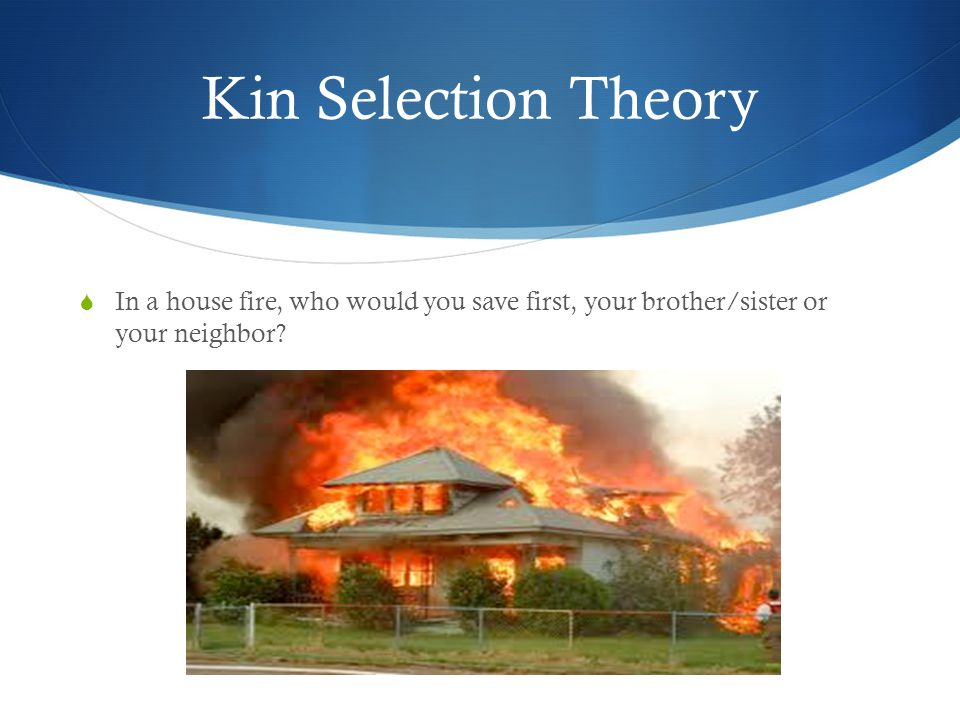Kin Selection Theory In a house fire, who would you save first, your brother/sister or your neighbor