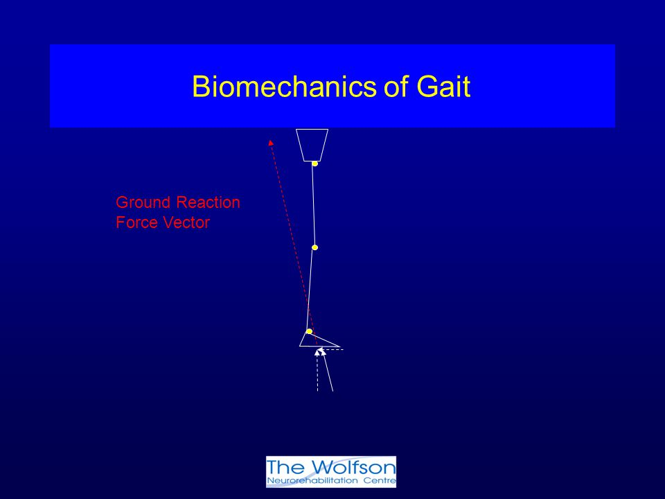 Biomechanics of Gait Ground Reaction Force Vector
