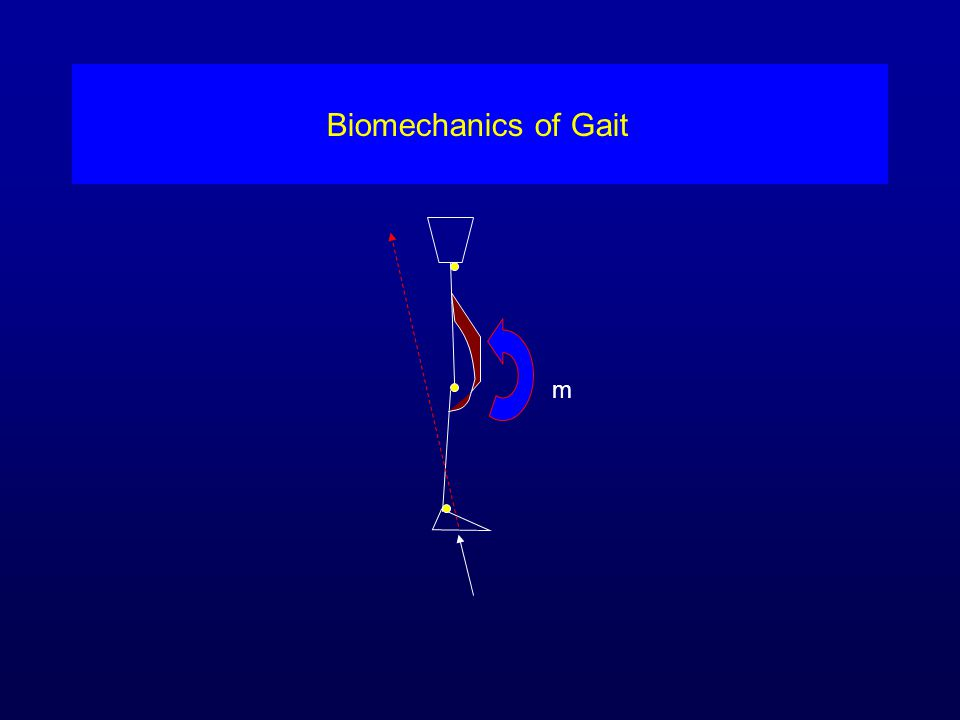 Biomechanics of Gait m