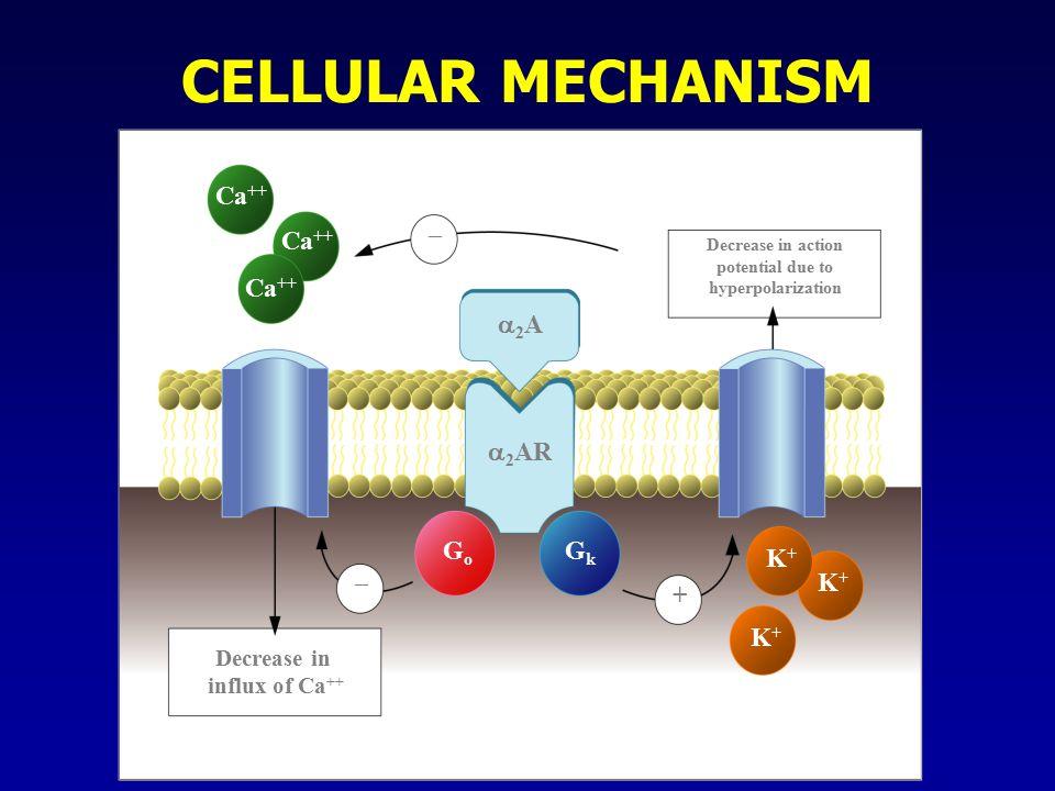 CELLULAR MECHANISM Ca++ – + a2A a2AR Go Gk K+