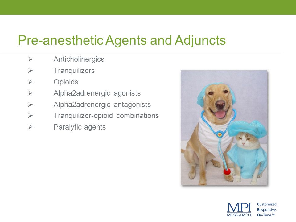 Pre-anesthetic Agents and Adjuncts