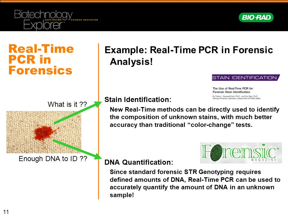Real-Time PCR in Forensics