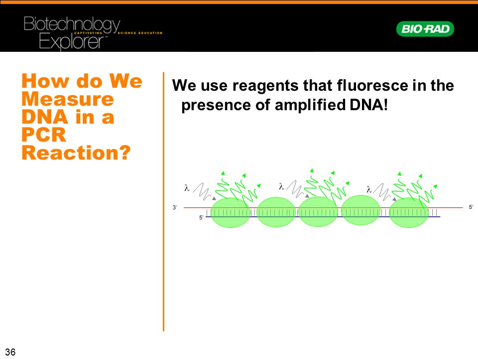 How do We Measure DNA in a PCR Reaction