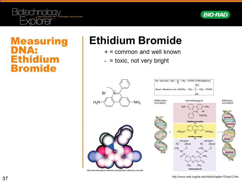 Measuring DNA: Ethidium Bromide