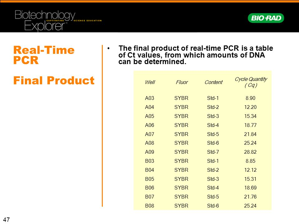 Real-Time PCR Final Product