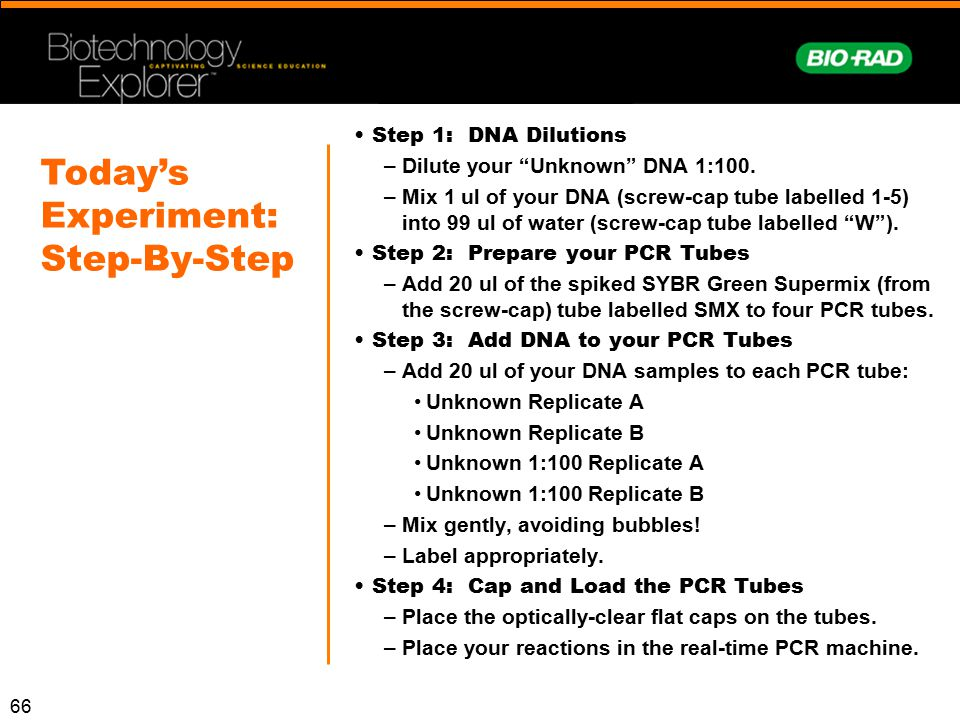Today's Experiment: Step-By-Step Step 1: DNA Dilutions