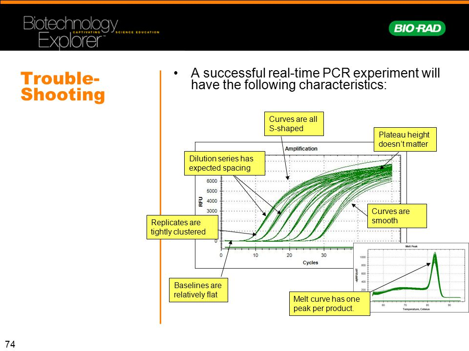 A successful real-time PCR experiment will have the following characteristics: