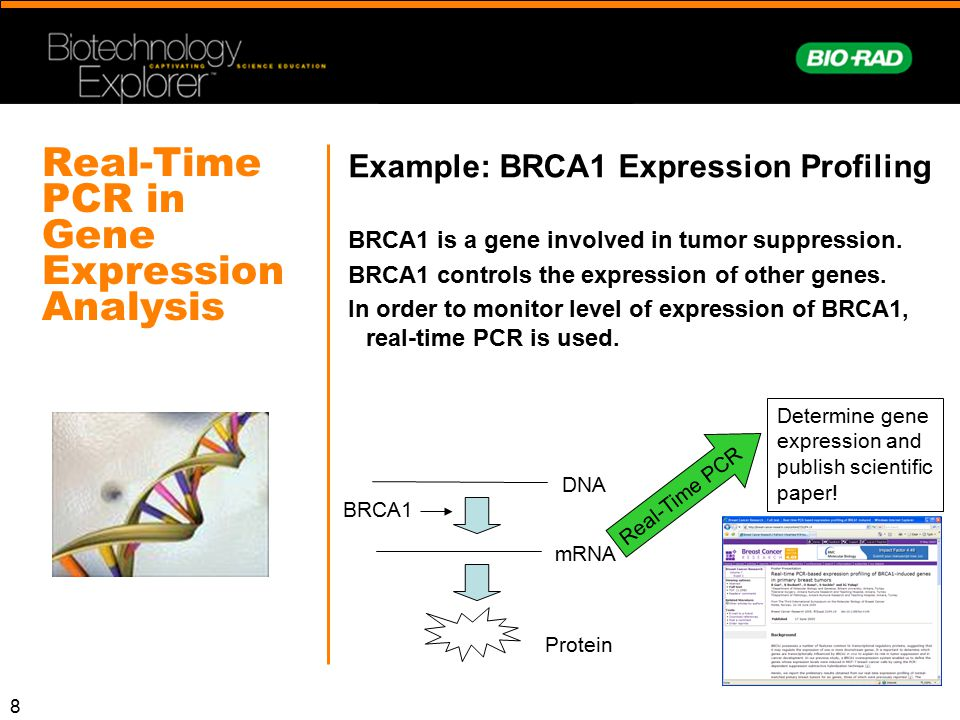 Real-Time PCR in Gene Expression Analysis