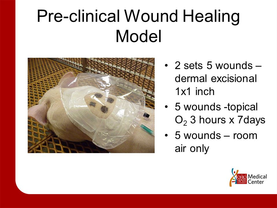 Pre-clinical Wound Healing Model