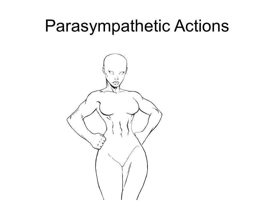 Parasympathetic Actions