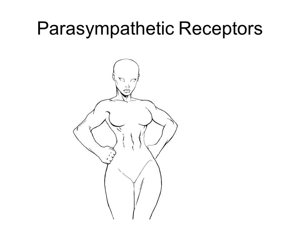 Parasympathetic Receptors