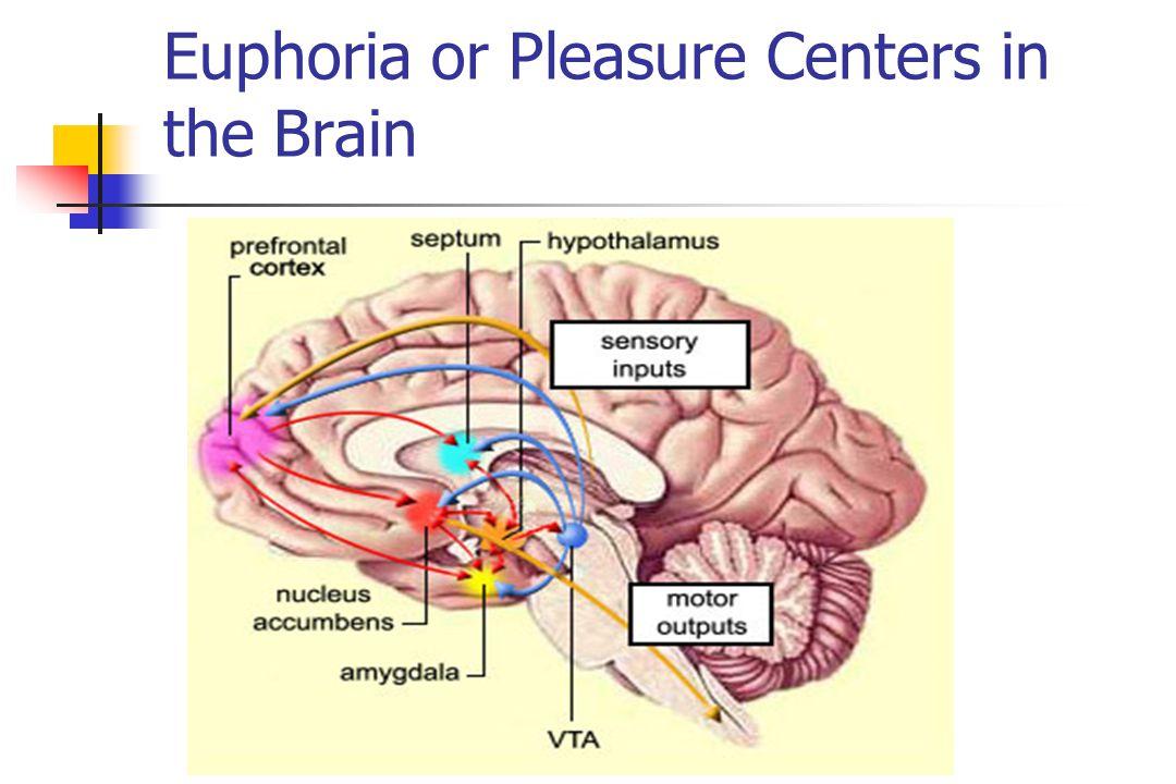 Euphoria or Pleasure Centers in the Brain