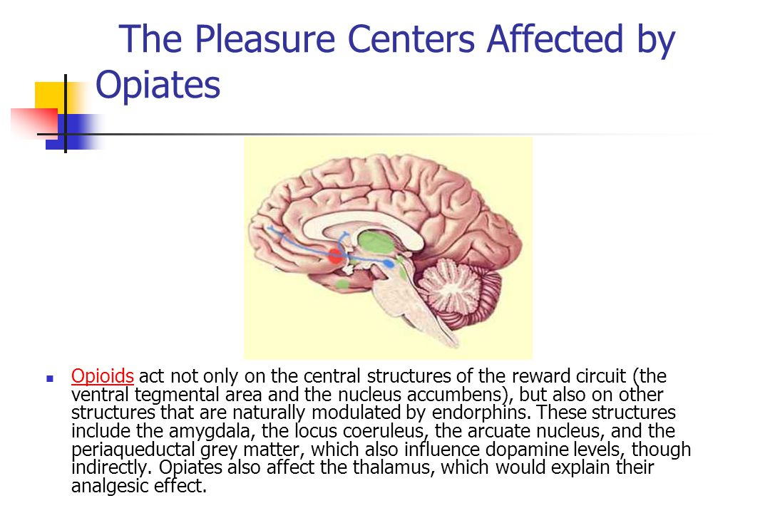 The Pleasure Centers Affected by Opiates