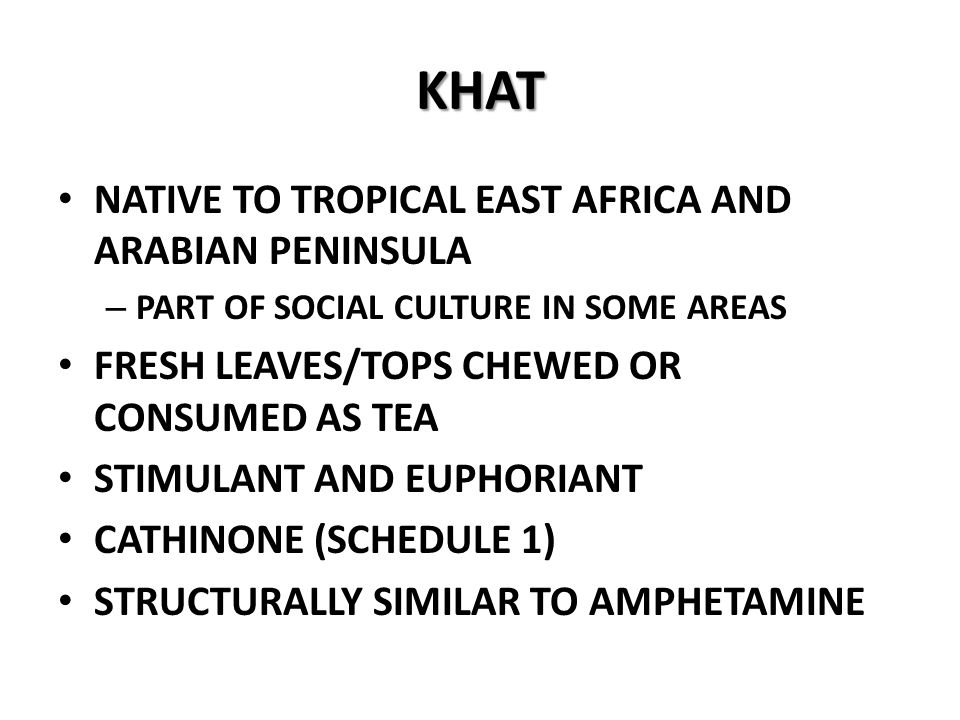 KHAT NATIVE TO TROPICAL EAST AFRICA AND ARABIAN PENINSULA