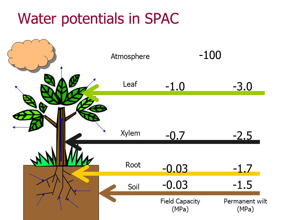 Water potentials in SPAC