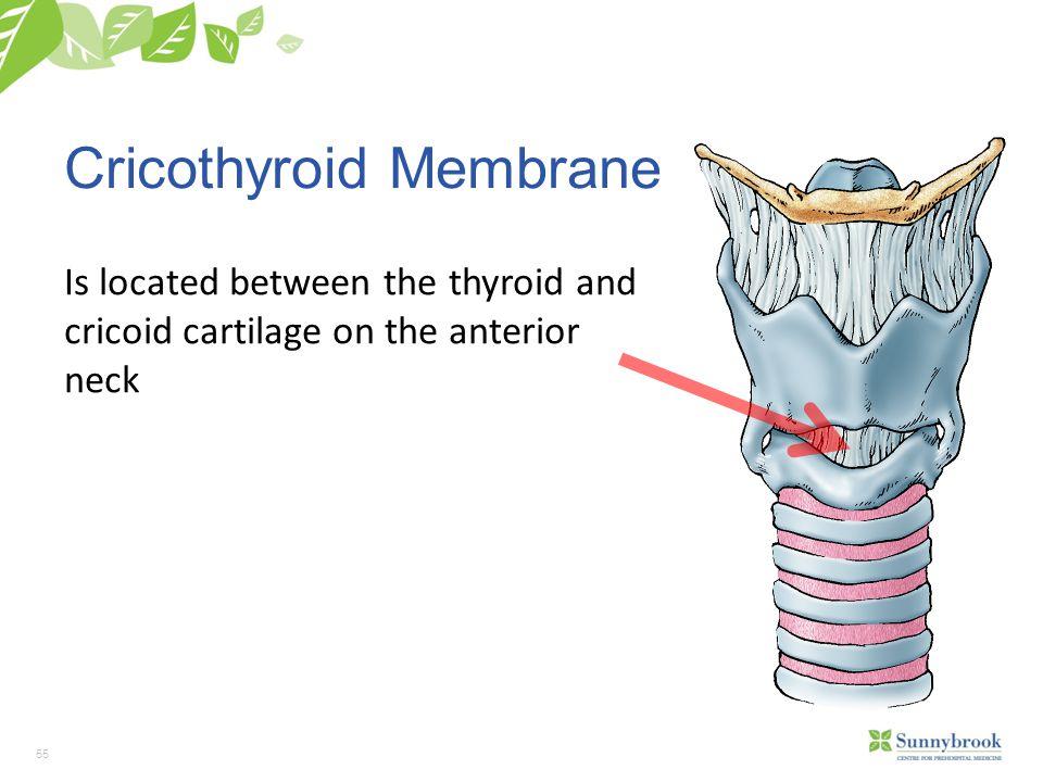 Cricothyroid Membrane