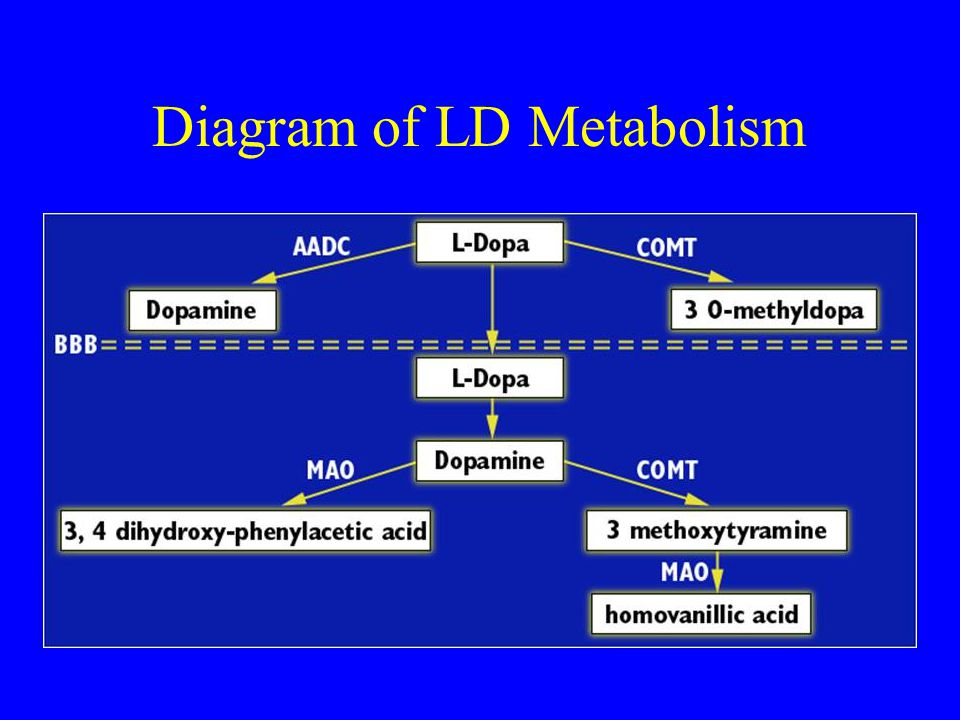 Diagram of LD Metabolism