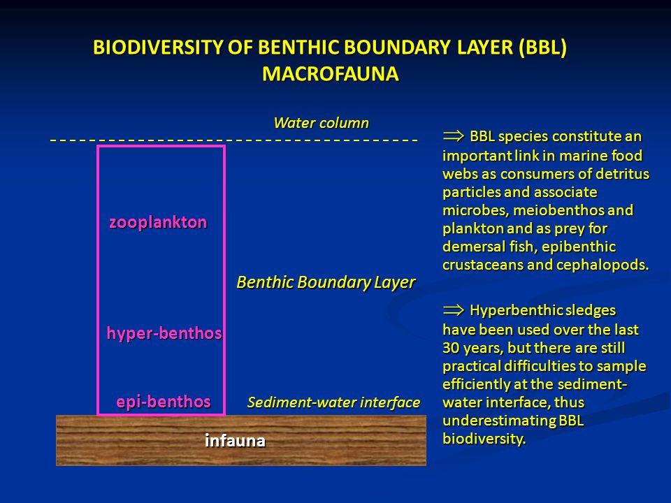 BIODIVERSITY OF BENTHIC BOUNDARY LAYER (BBL) MACROFAUNA