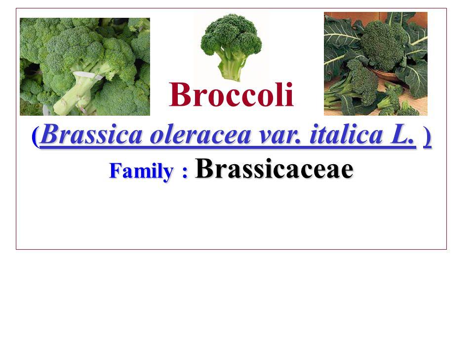 Broccoli (Brassica oleracea var. italica L. ) Family : Brassicaceae