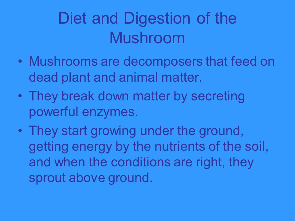 Diet and Digestion of the Mushroom