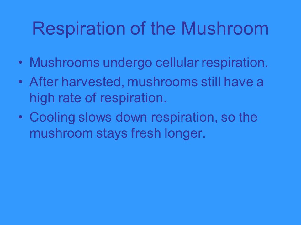 Respiration of the Mushroom
