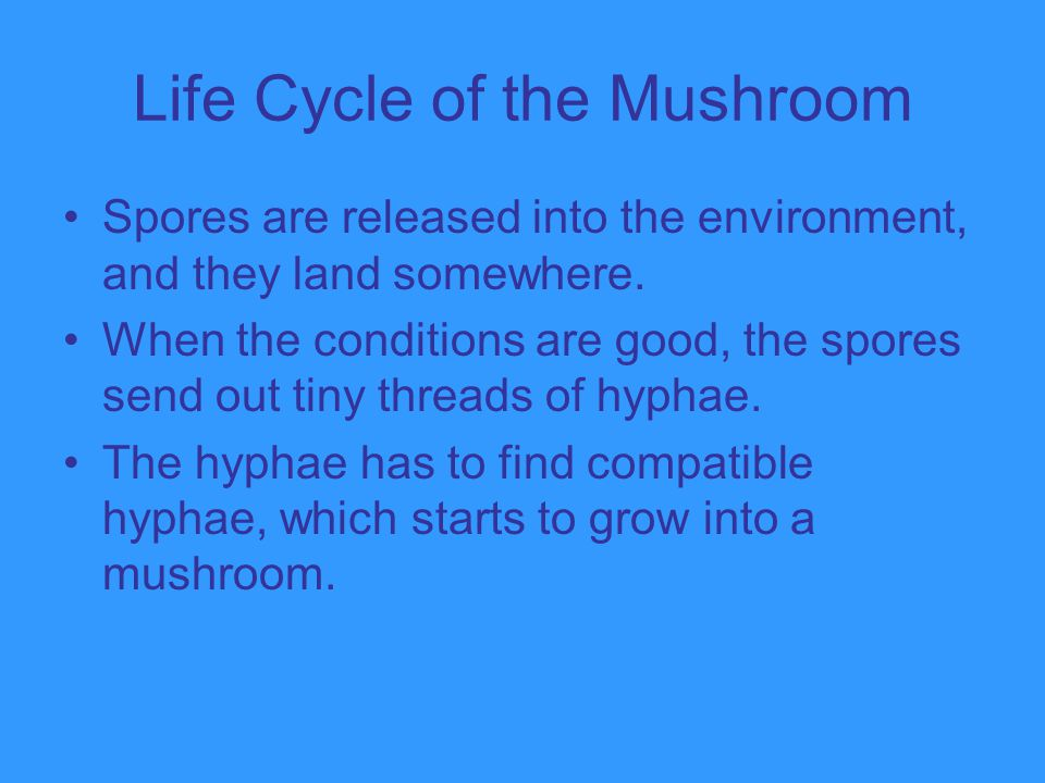 Life Cycle of the Mushroom
