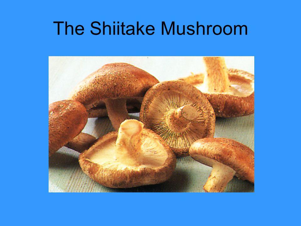 The Shiitake Mushroom