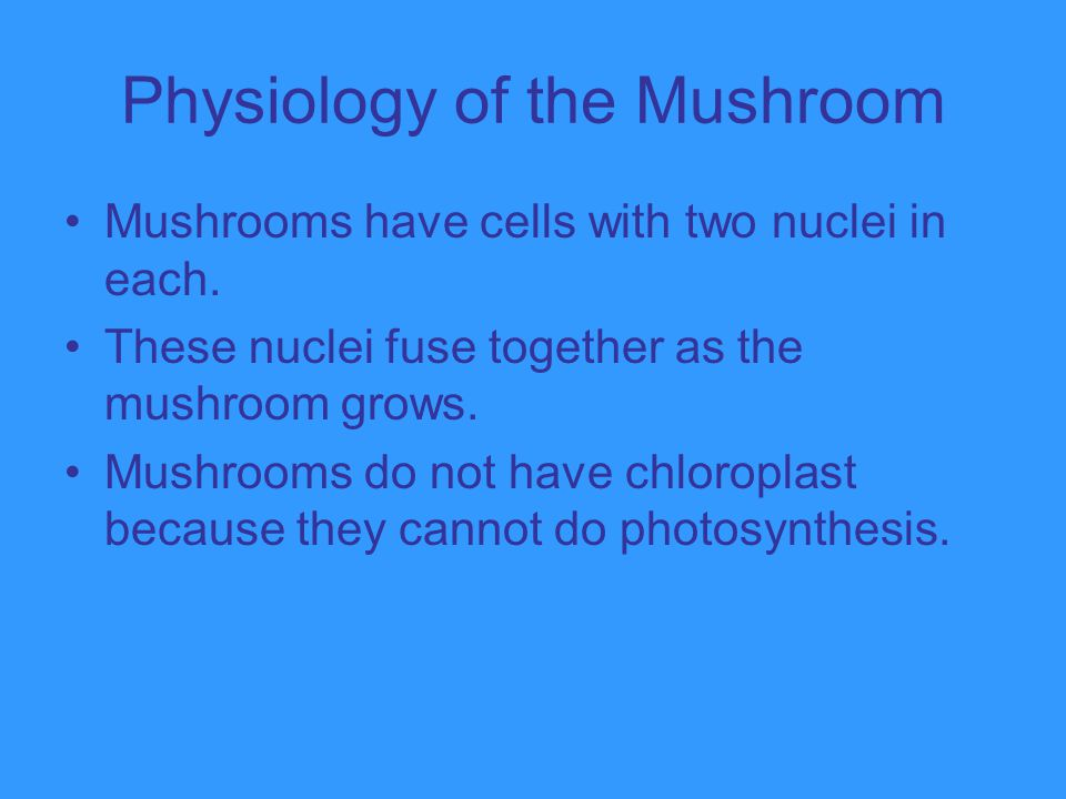 Physiology of the Mushroom
