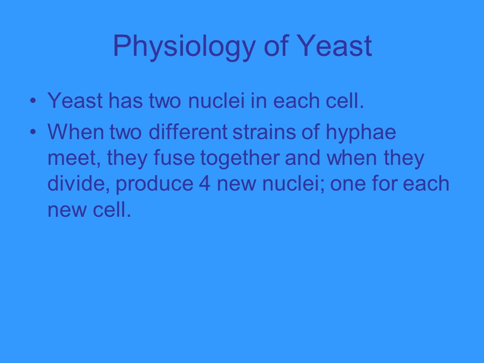 Physiology of Yeast Yeast has two nuclei in each cell.