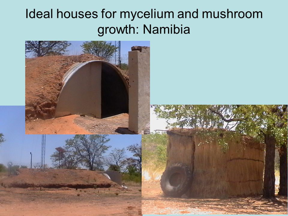 Ideal houses for mycelium and mushroom growth: Namibia