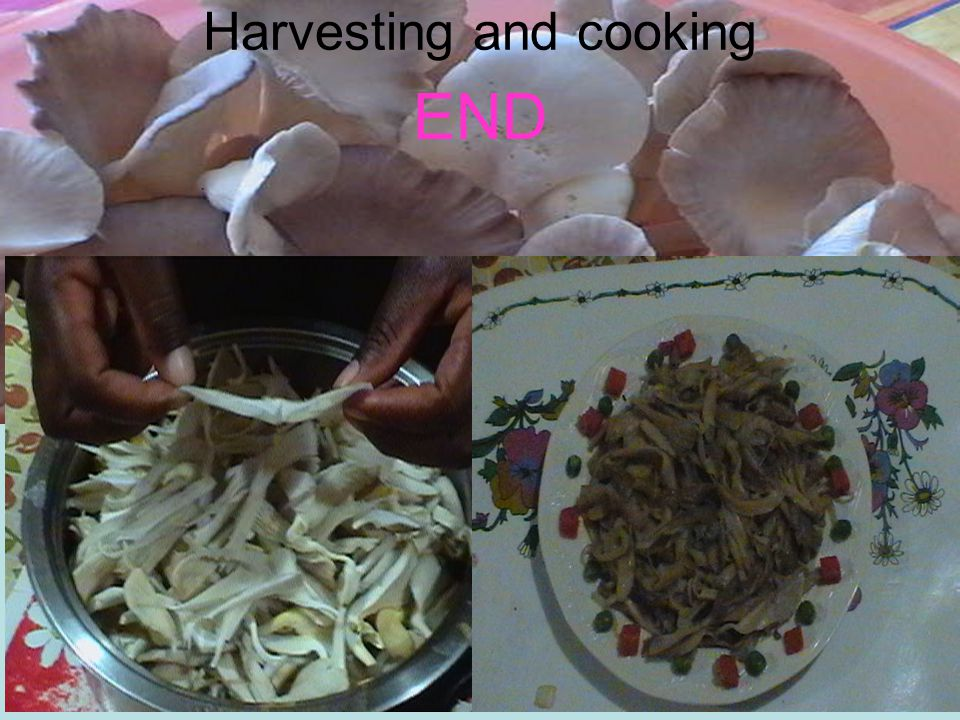 Harvesting and cooking