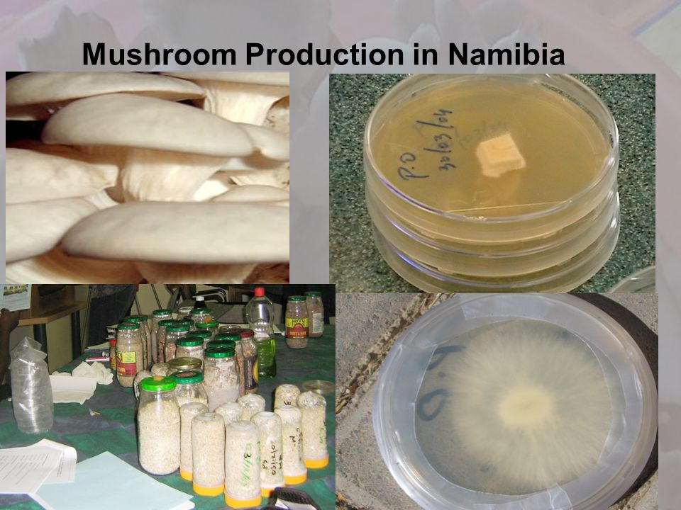 Mushroom Production in Namibia
