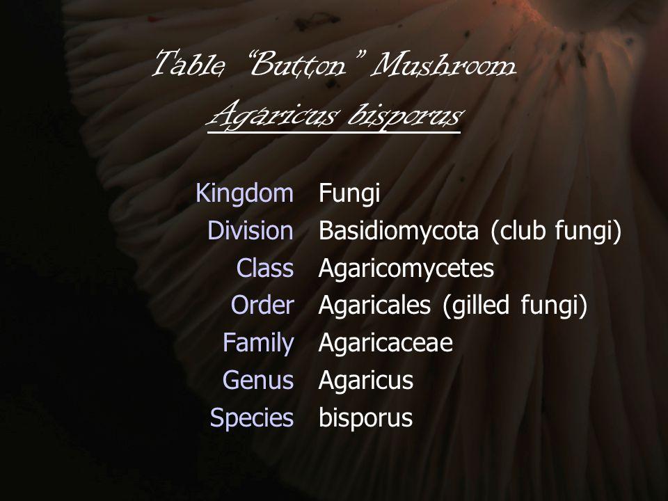 Table Button Mushroom Agaricus bisporus