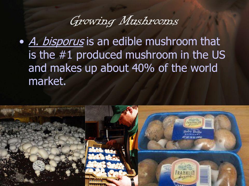Growing Mushrooms A.
