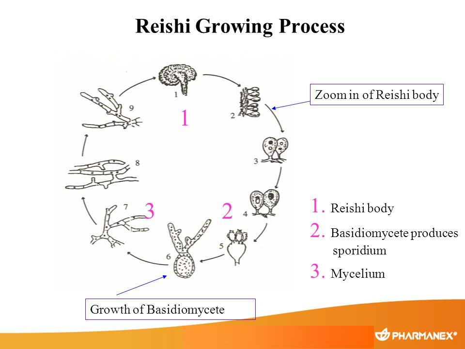 Reishi Growing Process