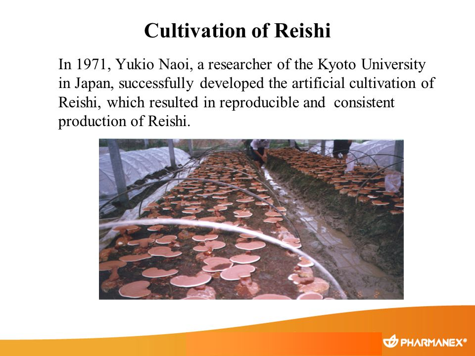 Cultivation of Reishi