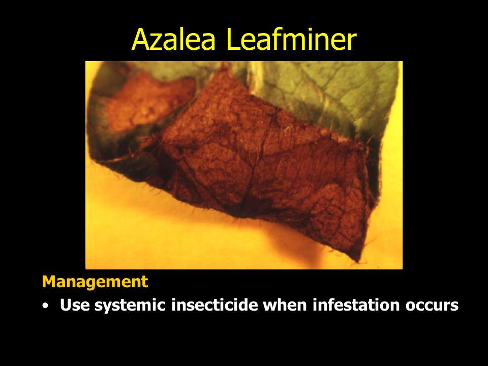 Azalea Leafminer Management
