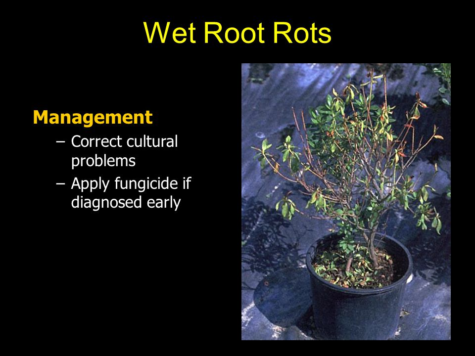 Wet Root Rots Management Correct cultural problems