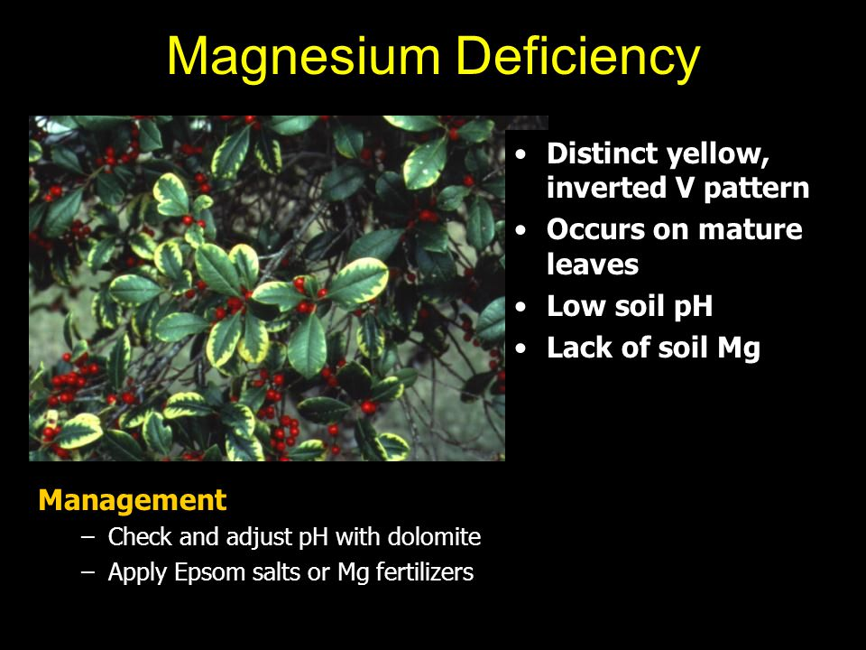 Magnesium Deficiency Distinct yellow, inverted V pattern