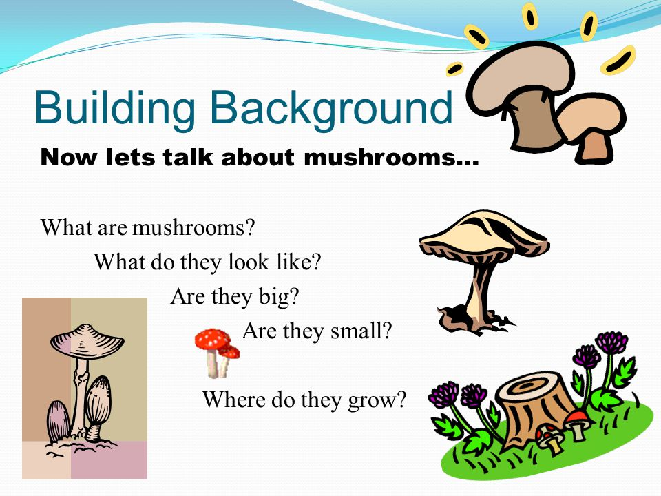 Building Background Now lets talk about mushrooms… What are mushrooms.