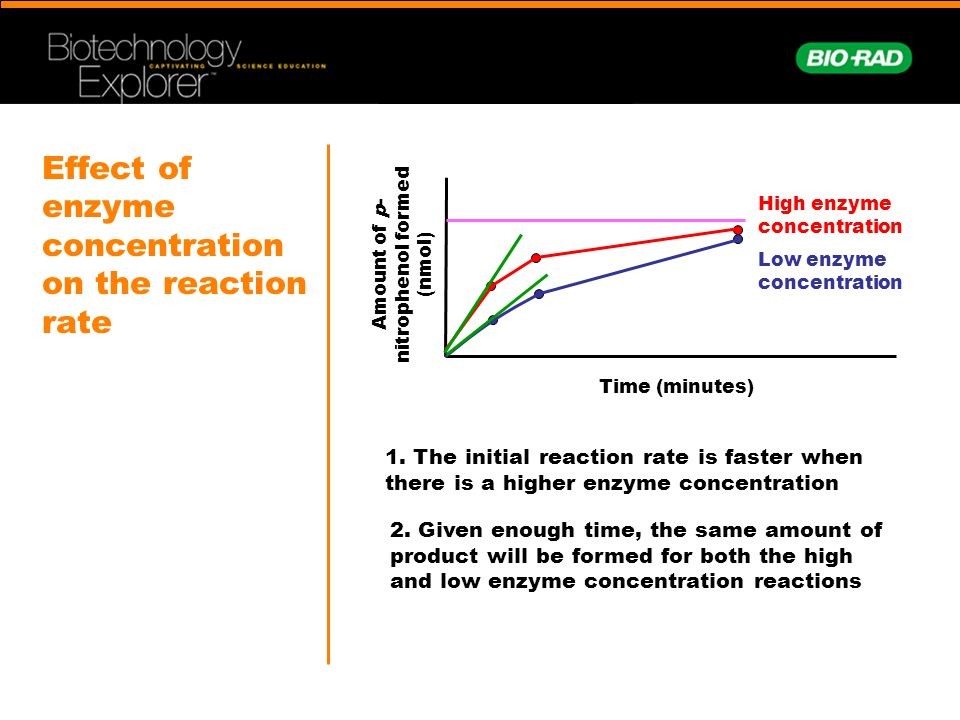 affect of concentration of enzymes on Introduction to enzymes after this point, increases in substrate concentration will not increase the velocity effects of inhibitors.