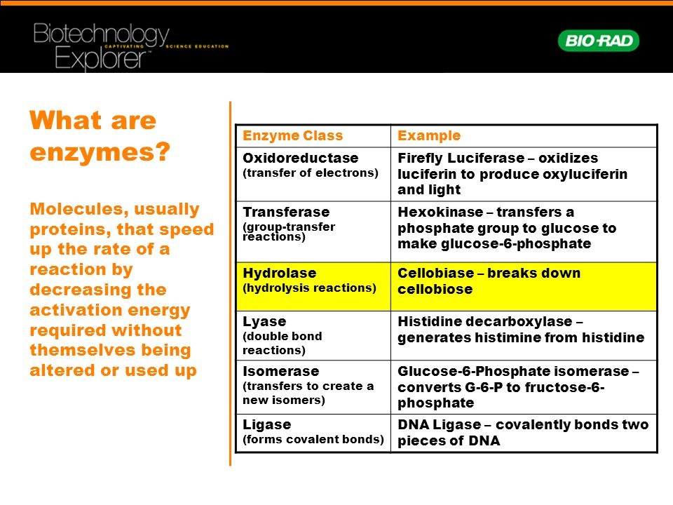 What are enzymes Molecules, usually proteins, that speed up the rate of a reaction by decreasing the activation energy required without themselves being altered or used up